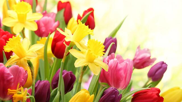 Spring-Flowers-Desktop.jpg